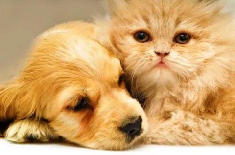 بالصور قطط وكلاب , صور رائعة ولطيفة للحيوانات المنزلية 302 10