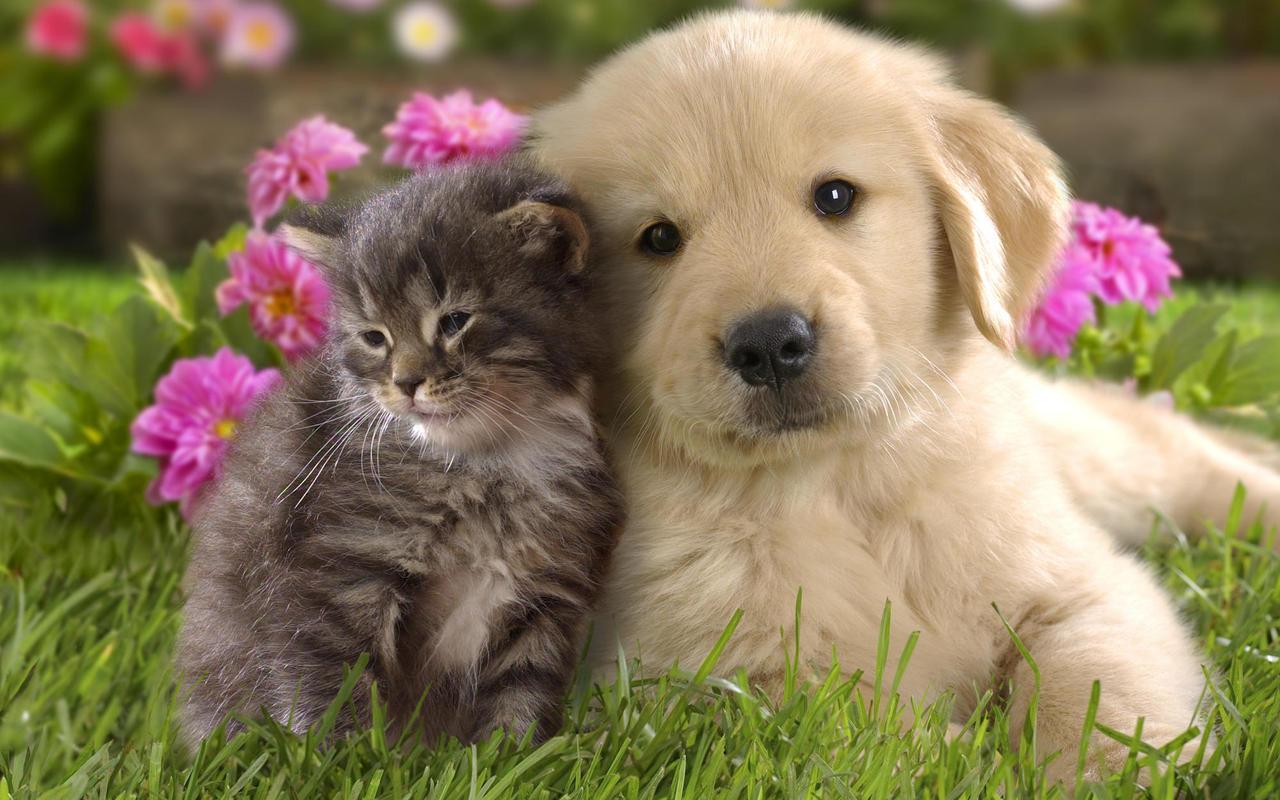 بالصور قطط وكلاب , صور رائعة ولطيفة للحيوانات المنزلية 302 11