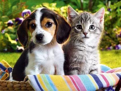 بالصور قطط وكلاب , صور رائعة ولطيفة للحيوانات المنزلية 302 12