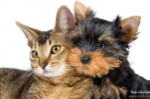 صوره قطط وكلاب , صور رائعة ولطيفة للحيوانات المنزلية