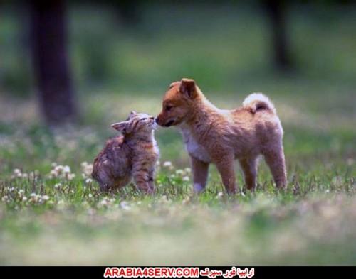 بالصور قطط وكلاب , صور رائعة ولطيفة للحيوانات المنزلية 302 3