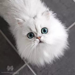 بالصور قطط وكلاب , صور رائعة ولطيفة للحيوانات المنزلية 302 4