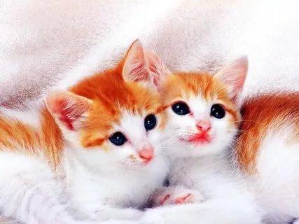 بالصور قطط وكلاب , صور رائعة ولطيفة للحيوانات المنزلية 302 5