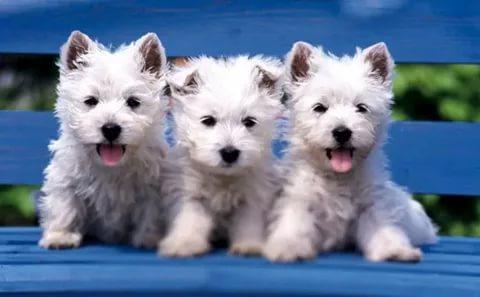 بالصور قطط وكلاب , صور رائعة ولطيفة للحيوانات المنزلية 302 7