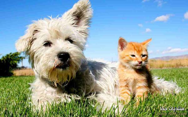 بالصور قطط وكلاب , صور رائعة ولطيفة للحيوانات المنزلية 302 8