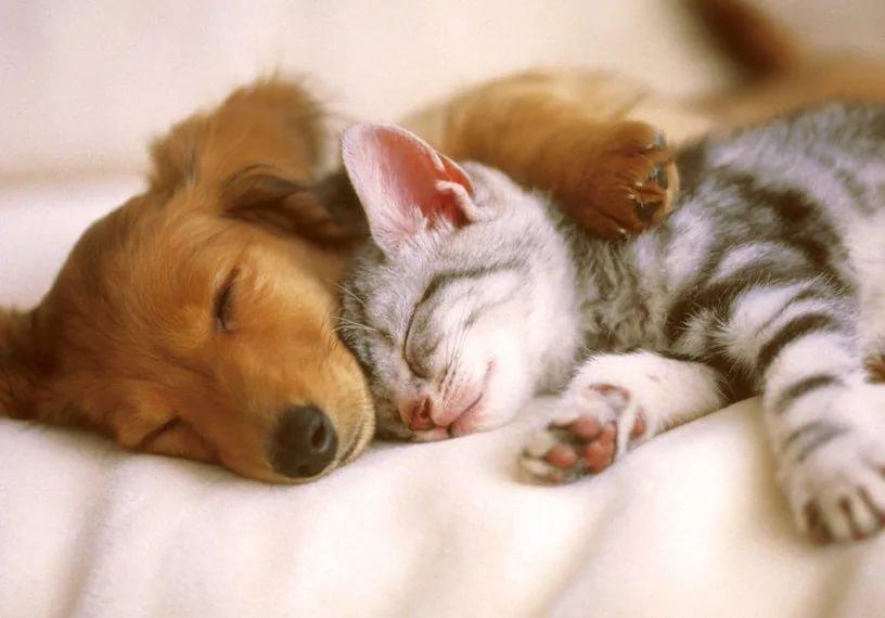بالصور قطط وكلاب , صور رائعة ولطيفة للحيوانات المنزلية 302 9