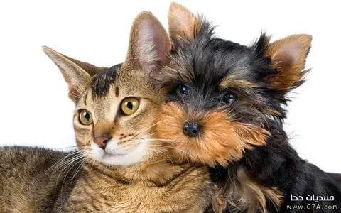 بالصور قطط وكلاب , صور رائعة ولطيفة للحيوانات المنزلية 302
