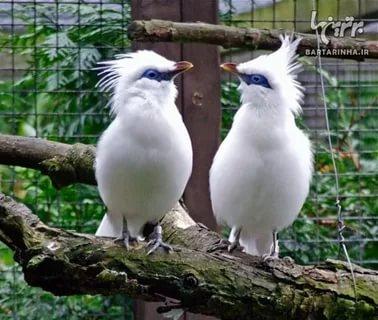بالصور اجمل الطيور في العالم , احلى اشكال للطير الملون 335 1