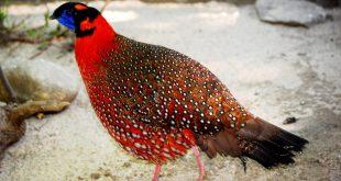 صوره اجمل الطيور في العالم , احلى اشكال للطير الملون