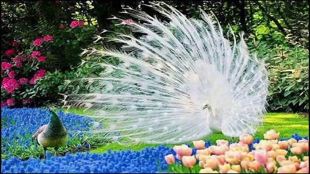 بالصور اجمل الطيور في العالم , احلى اشكال للطير الملون 335 2
