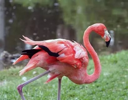 بالصور اجمل الطيور في العالم , احلى اشكال للطير الملون 335 3