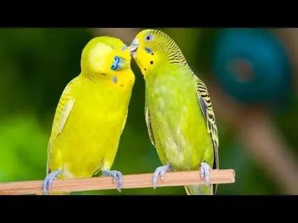 بالصور اجمل الطيور في العالم , احلى اشكال للطير الملون 335 6