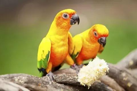 بالصور اجمل الطيور في العالم , احلى اشكال للطير الملون 335 7