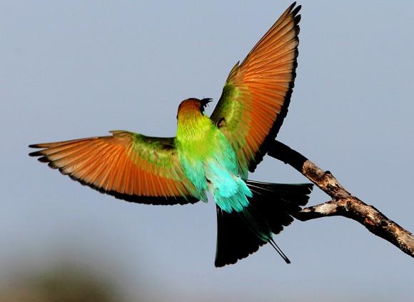 بالصور اجمل الطيور في العالم , احلى اشكال للطير الملون 335 8