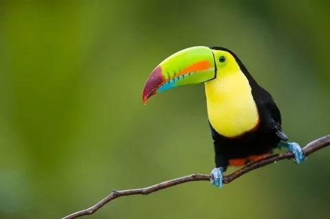 بالصور اجمل الطيور في العالم , احلى اشكال للطير الملون 335 9