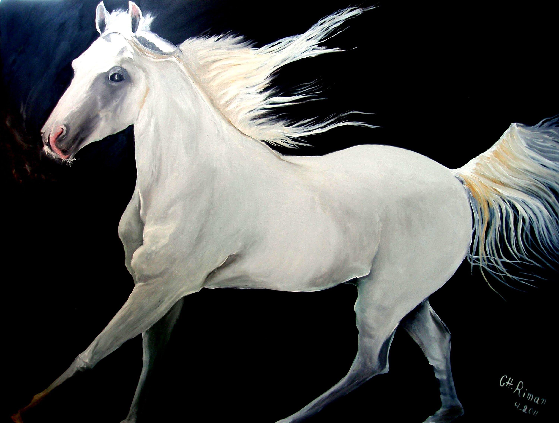 بالصور اجمل حصان فى العالم , صور لاكثر الاحصنة جمال واصل 338 10