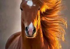 صوره اجمل حصان فى العالم , صور لاكثر الاحصنة جمال واصل