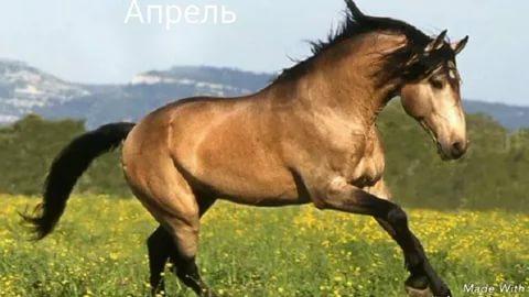بالصور اجمل حصان فى العالم , صور لاكثر الاحصنة جمال واصل 338 7
