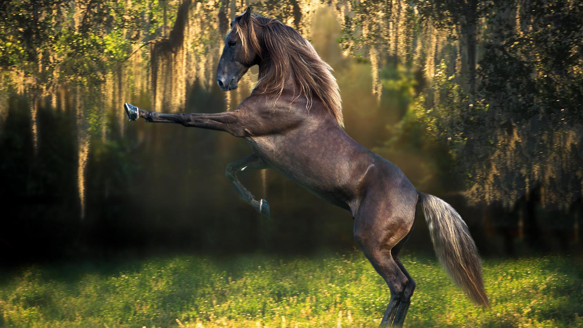 بالصور اجمل حصان فى العالم , صور لاكثر الاحصنة جمال واصل 338 9