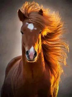 صور اجمل حصان فى العالم , صور لاكثر الاحصنة جمال واصل