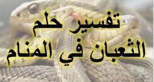 صوره تفسير الحية في المنام , شرح ظهور الثعبان فى الحلم