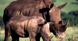 صورة صور حيوانات , اندر صورة للحيوانات لم ترها من قبل