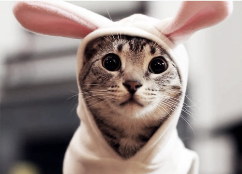 بالصور صور قطط جميلة , اجمل خلفيات للقطط اللطيفة 502 10