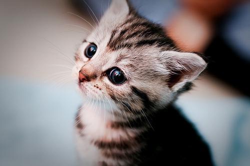 بالصور صور قطط جميلة , اجمل خلفيات للقطط اللطيفة 502 11