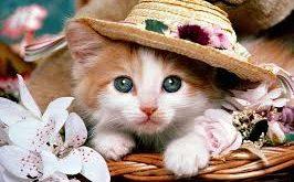بالصور صور قطط جميلة , اجمل خلفيات للقطط اللطيفة 502 12 266x165
