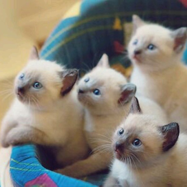 بالصور صور قطط جميلة , اجمل خلفيات للقطط اللطيفة 502 2