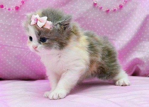 بالصور صور قطط جميلة , اجمل خلفيات للقطط اللطيفة 502 3