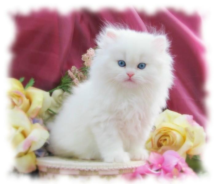 بالصور صور قطط جميلة , اجمل خلفيات للقطط اللطيفة 502 4