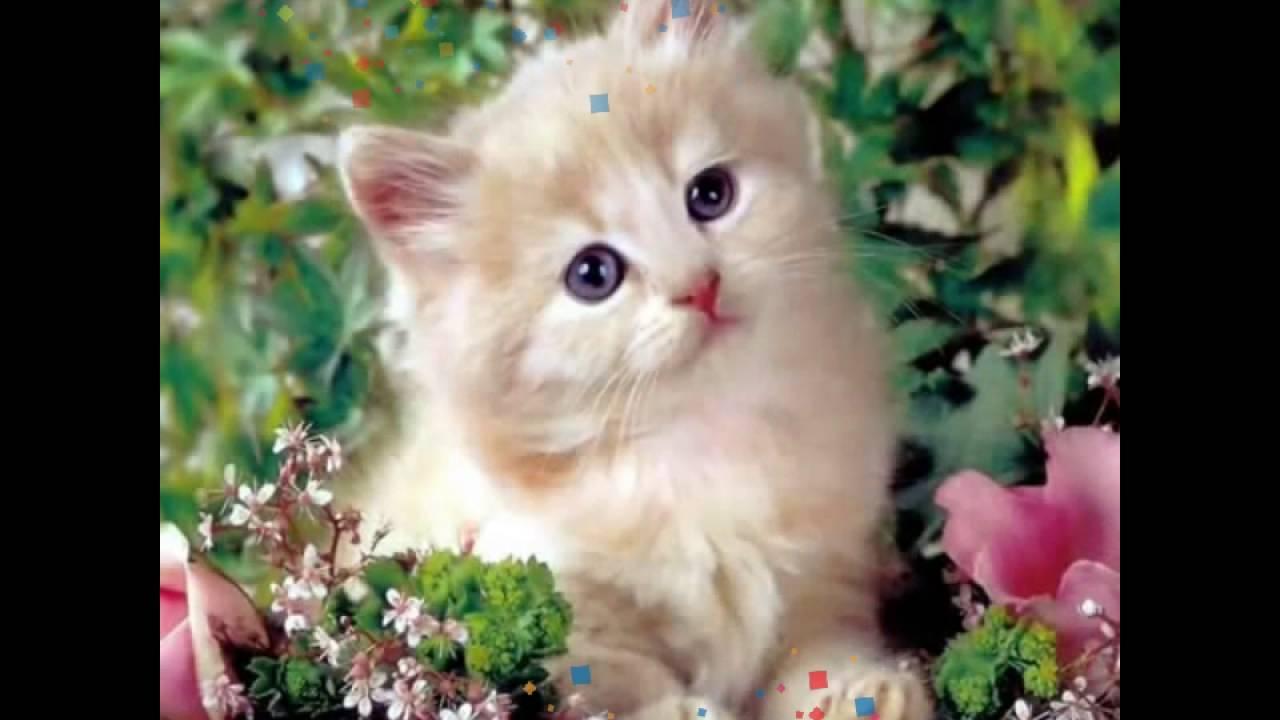 بالصور صور قطط جميلة , اجمل خلفيات للقطط اللطيفة 502 5