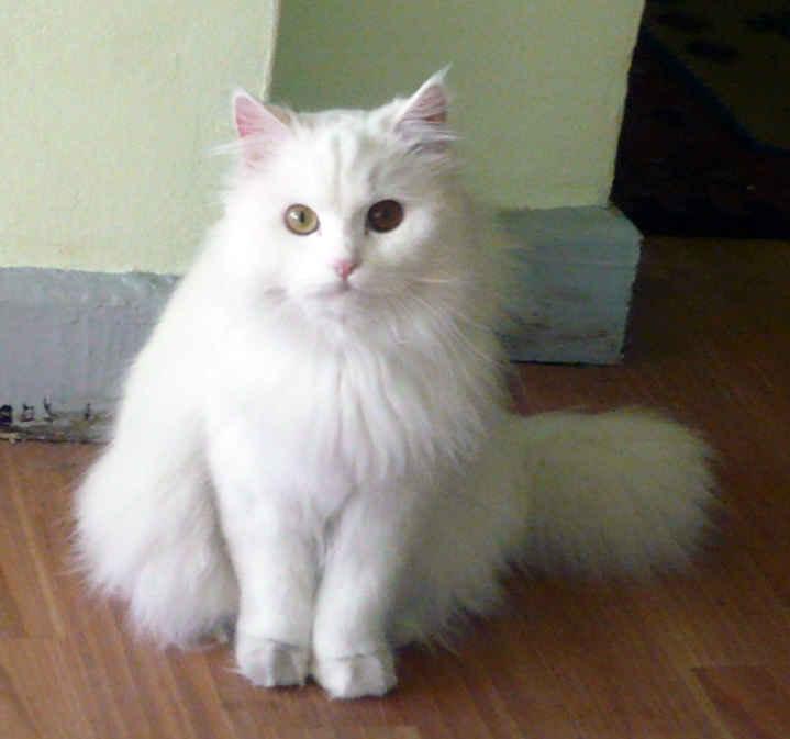 بالصور صور قطط جميلة , اجمل خلفيات للقطط اللطيفة 502 8