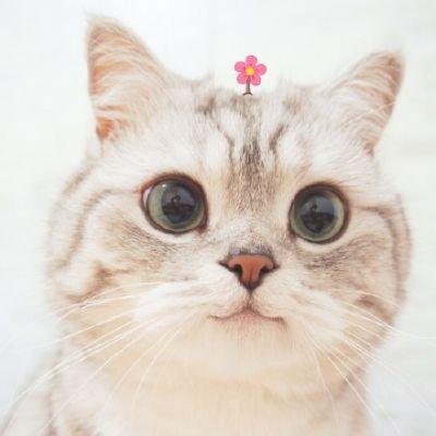 بالصور صور قطط جميلة , اجمل خلفيات للقطط اللطيفة 502 9