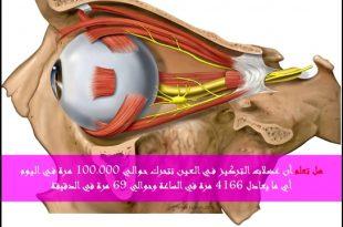 بالصور هل تعلم عن الانسان , حقائق ومعلومات عن جسم الانسان 861 2 310x205