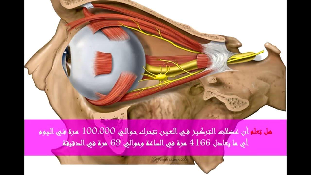 بالصور هل تعلم عن الانسان , حقائق ومعلومات عن جسم الانسان 861