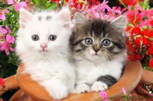صوره صور قطط , قطط تجنن