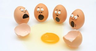 رجيم البيض , تعرف على مكونات رجيم البيض ودوره فى انقاص الوزن