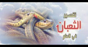 تفسير رؤية الثعبان في المنام , فيديو يفسر قدوم الثعابين فى الحلم