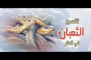صورة تفسير رؤية الثعبان في المنام , فيديو يفسر قدوم الثعابين فى الحلم