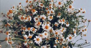 صوره صور ورد رومانسيه , ايثار العاطفة عبر الازهار الكلاسيكية