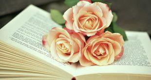 صوره صور ورد حلوه , الرقة الشاعرية فى الورود الطبيعية الخلابة
