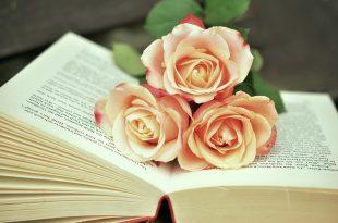 صور صور ورد حلوه , الرقة الشاعرية فى الورود الطبيعية الخلابة