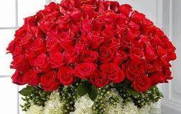 بالصور صور الورد , اجمل وردو في العالم 608 12 260x165