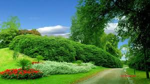 صور تنزيل صور جميلة , اجمل صور لمناظر طبيعية