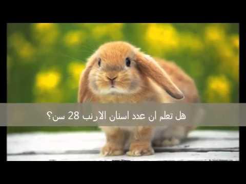 صورة هل تعلم عن الحيوانات , معلومات عن عالم الحيوان 681 1