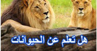 صوره هل تعلم عن الحيوانات , معلومات عن عالم الحيوان