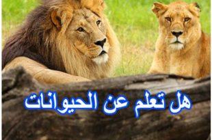 بالصور هل تعلم عن الحيوانات , معلومات عن عالم الحيوان 681 2 310x205