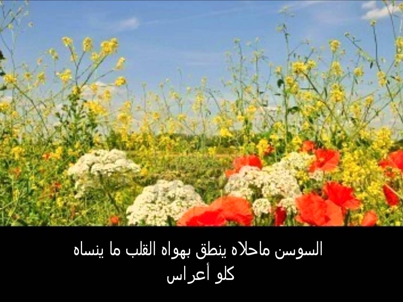 بالصور شعر عن الربيع , عبارات عطرية تفوح بازهار الربيع 1493 7